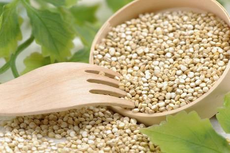 Du quinoa belge dans nos assiettes | histoiresbelges | Scoop.it
