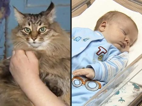 Hero Cat Saves Baby from Freezing to Death | animals and prosocial capacities | Scoop.it