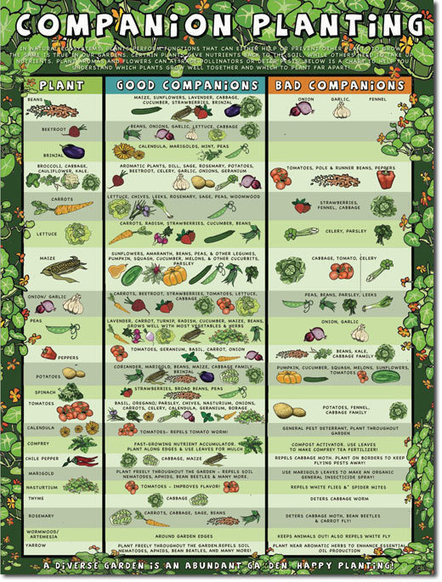 Companion Planting Chart | Sustainable Futures | Scoop.it