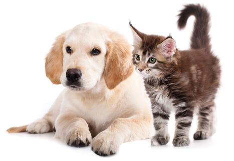Important Tips to Keep your Pets Healthy and Happy | Pet Care | Scoop.it