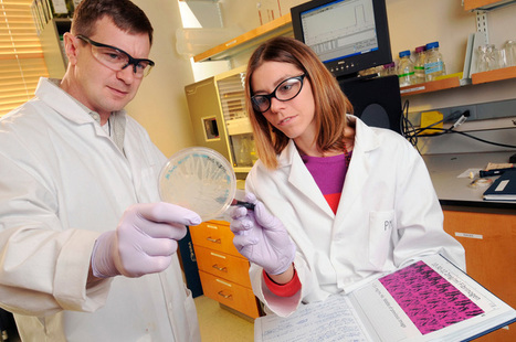 Artificial Platelets Could Soon Enter Human Trials   DiscoverMagazine.com   The future of medicine and health   Scoop.it