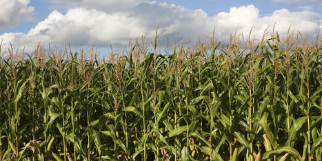 A Farmer's Perspective on GMOs - Huffington Post | Science and Tech | Scoop.it