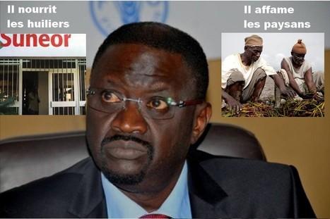 Sénégal : les huiliers payent-ils les producteurs d'arachides? | Questions de développement ... | Scoop.it