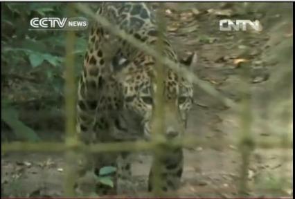 Belize Zoo on CCTV News   belize   Scoop.it