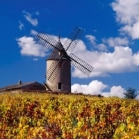 What's so good about Beaujolais 2010 (Free for all)   @zone41 Wine World   Scoop.it