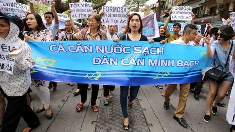 Vietnamese Protest Mysterious Fish Kill   Aquaculture Directory   Scoop.it