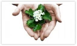 Una cura naturale: i Fiori di Bach - MondoLiberOnline | Counselinglifestyle | Scoop.it