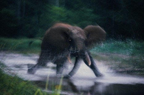 The secret lives of African elephants - Washington Post | Best Animation and Multimedia institute Delhi | Scoop.it
