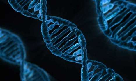 How our cells use mother's and father's genes | Fragments of Science | Scoop.it