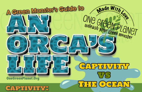 An Orca's Life in Captivity vs. the Ocean [INFOGRAPHIC]   One ...   Info graph, Chard   Scoop.it