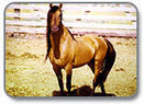 The Kiger Mustang Oregon/Washington BLM | DanyelleD 3 | Scoop.it