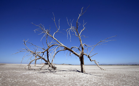 Restoration work begins on part of Salton Sea | Sustainability Science | Scoop.it