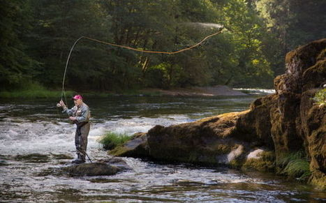 State limits fishing on Umpqua River to save overheated fish - OregonLive.com | Fish Habitat | Scoop.it