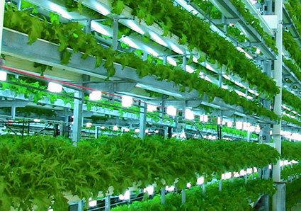 Hydroponic Gardening | Unit 1 | Scoop.it
