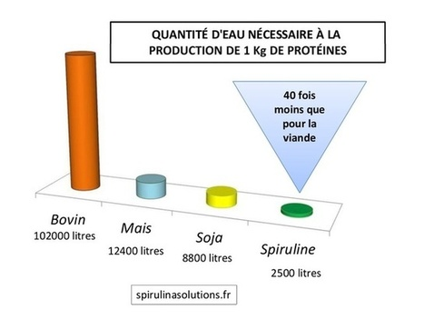 R&D CULTURE DE SPIRULINE | AgroSup Dijon Veille Scientifique AgroAlimentaire - Agronomie | Scoop.it
