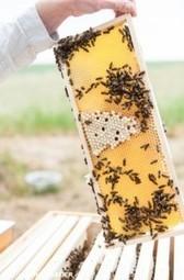 Bee-ologisch   Bienen   Scoop.it