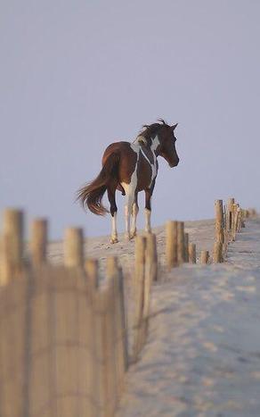 Wild pony on the sand dunes ... | desert photography | Scoop.it