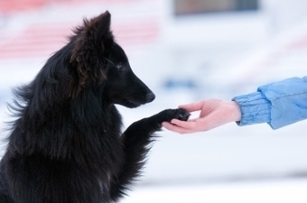 Training Your Dog With Kindness | Pets | Scoop.it