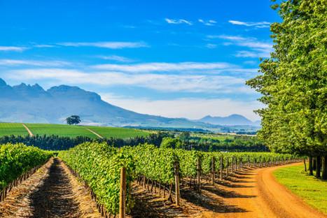 Stunning Pinotage from Stellenbosch | Vino in Love | Scoop.it