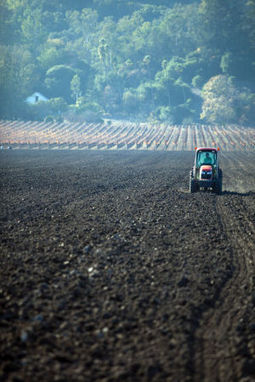 The growing business of replanting | Southern California Wine and Craft Spirits Journal | Scoop.it