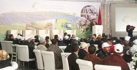 Maroc : le Conseil agricole, maillon  fort de l'agriculture durable - Auhourd'hui.ma | Agriculture et Alimentation méditerranéenne durable | Scoop.it