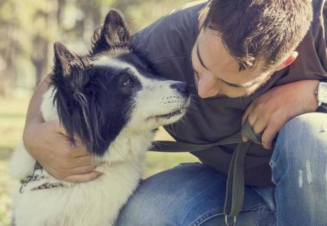 Dogs May Be Man's Best Medicine, Too | Medical Daily | CALS in the News | Scoop.it