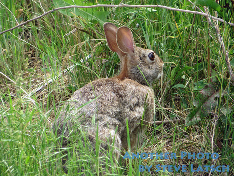 Rabbit in the Meadow | Travel Musings and Photography | Scoop.it