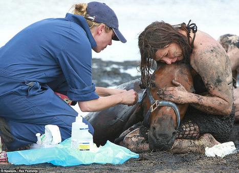 Un cheval sauvé des sables mouvants par sa propriétaire - PegaseBuzz | Cheval | Scoop.it