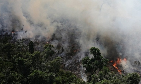 Amazon rainforest losing ability to regulate climate, scientist warns | sustainability and resilience | Scoop.it