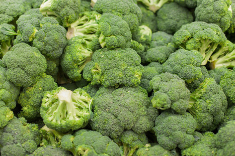 BBSRC mention: Broccoli Could Help Prevent Osteoarthritis | BIOSCIENCE NEWS | Scoop.it