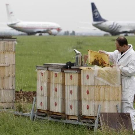 La contaminación por diésel afecta a las abejas - Terra España | Apicultura Investigación | Scoop.it