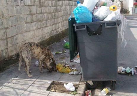 Seattle, la primera ciudad donde está penalizado tirar comida a la basura. | Educacion, ecologia y TIC | Scoop.it