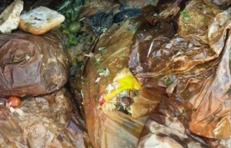 VIDEO. Un chat sauvé d'un tas d'ordures destiné à l'incinérateur | CaniCatNews-actualité | Scoop.it