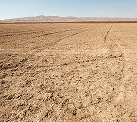 Scientists forecast economic impacts of the drought on Central Valley agriculture :: UC Davis News & Information | California drought | Scoop.it