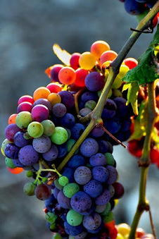 Rainbow Grapes ~ Interesting Facts You Should Know | World Facts | Scoop.it