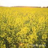 Oil seed can slash CO2 emissions in farming by 13% | Sustain Our Earth | Scoop.it