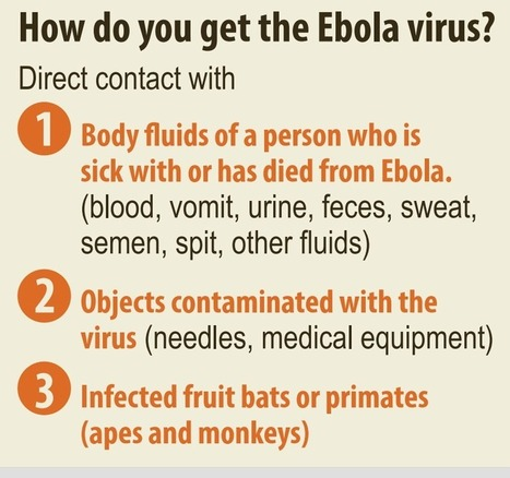 What You Need To Know About Ebola Virus and Transmission | Health and Wellness | Scoop.it