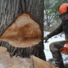 Lovell Logging & Tree Inc
