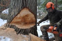 Experienced and capable tree company - Lovell Logging & Tree Inc | Lovell Logging & Tree Inc | Scoop.it