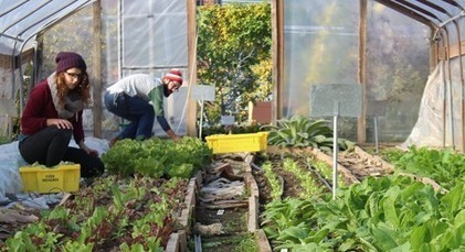 Abandoned Lot Turned Urban Farm in Philadelphia Brings Fresh Food to Where Its Needed – LifeWise | Urban Agriculture | Scoop.it