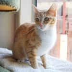 Devoted Mama Cat Who Protected Her Kittens From Shooter Is Adopted From Shelter   Pet News   Scoop.it