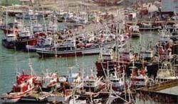 Política pesquera comunitaria, globalización y desarrollo sostenible | PESCADORES & GLOBALIZACIÓN | Scoop.it