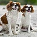 5 Shih Tzu Personality Traits : Small & In Charge: Dog Guide: Animal Planet | Why Shih Tzus  make the best pets | Scoop.it