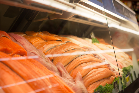 A Fishy Precedent? Food Quality Control Agents Approve GMO Salmon for Sale in Canada | News from Pharma world | Scoop.it