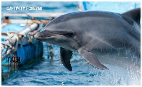 Champions For Cetaceans Daily Scoop: Bottlenose Dolphins in The Cove | Dolphins | Scoop.it