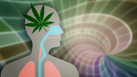 What Marijuana Actually Does to Your Brain and Body | Life & living well | Scoop.it