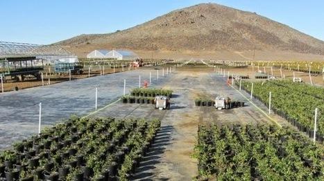 career: Robots Perform Manual Labor to Make Farming Easier 02-11 | bioniQ | Scoop.it