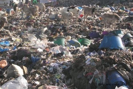 Insolite : ces déchets qui deviennent des business juteux | Widoobiz | Tout le web | Scoop.it