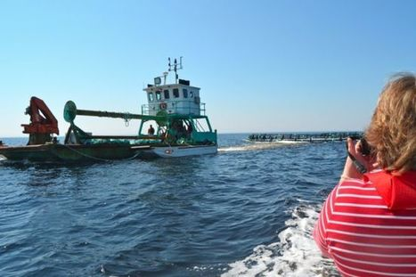It's payback time: Cooke Aquaculture repays province after failing to build fish plant in Shelburne | Nova Scotia Fishing | Scoop.it