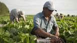 Farmers hope immigration bill yields more foreign ag workers - The Sacramento Bee | Community Village Daily | Scoop.it
